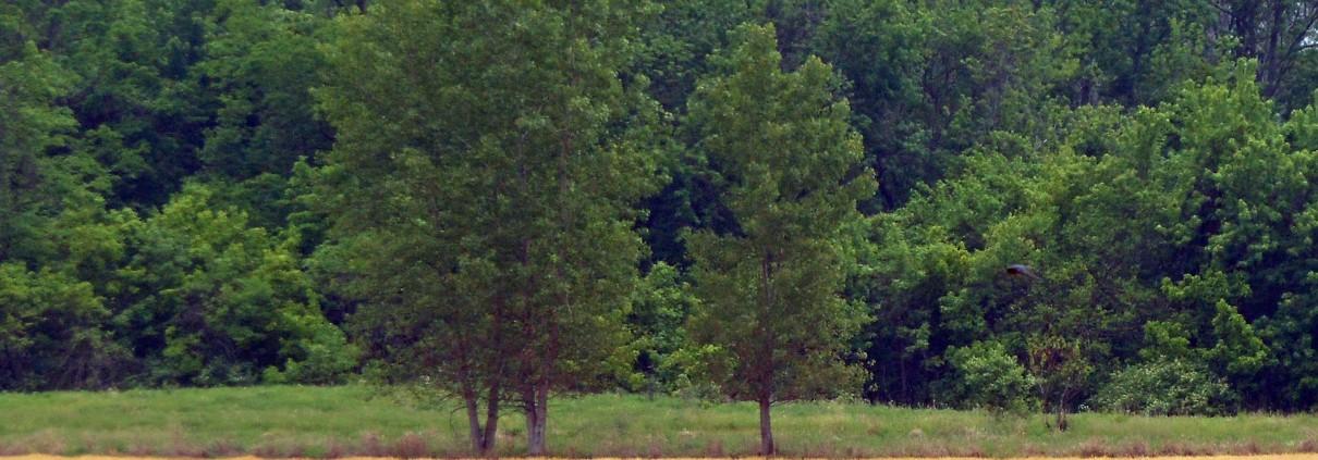 Mound 8 & 9 Kunnemann 2a