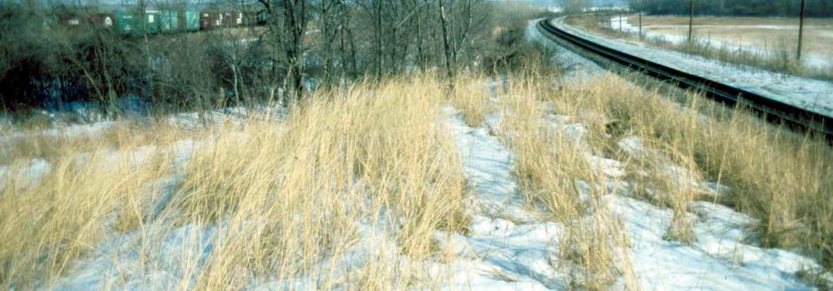 Mound 64 remnant (true Rattlesnake Md) 2